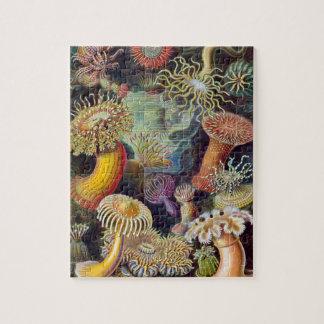 Vintage sea anemones scientific illustration puzzle