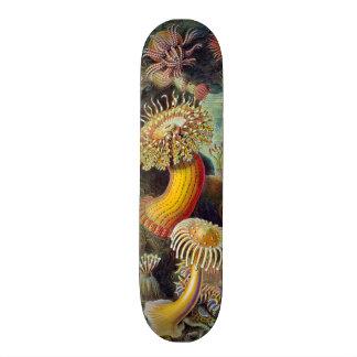 Vintage sea anemones scientific illustration skateboard