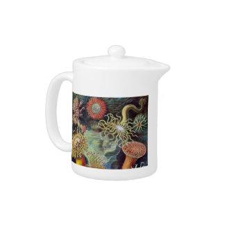 Vintage sea anemones scientific illustration teapot