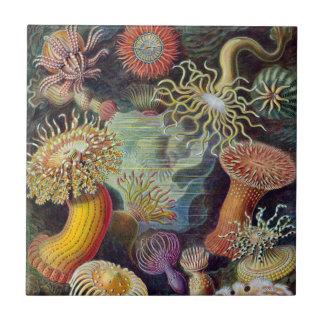 Vintage sea anemones scientific illustration tile