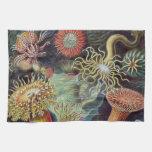 Vintage sea anemones scientific illustration towel