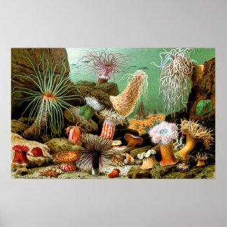 Vintage Sea anemones underwater scene Poster