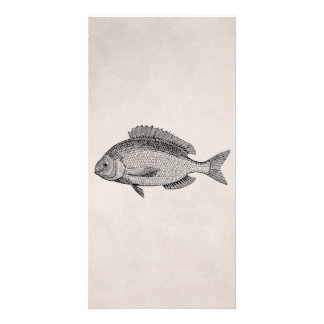 Vintage Sea Bream Fish Retro Fishes Parchment Card