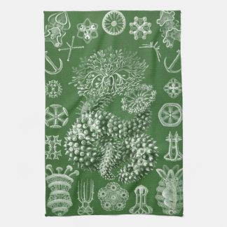 Vintage Sea Creatures Haeckels Ocean Life Print Hand Towel