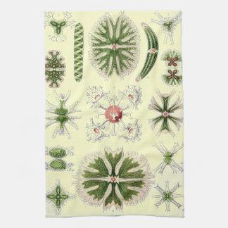 Vintage Sea Creatures Haeckels Ocean Life Print Kitchen Towel