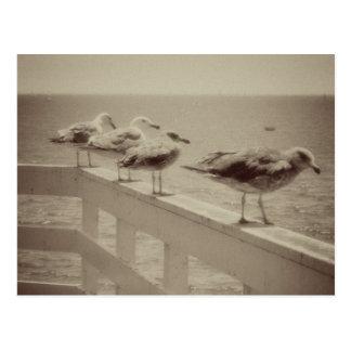 Vintage Sea Gulls Postcard