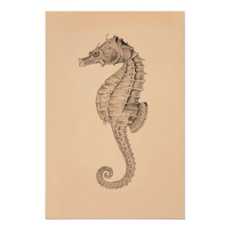 Vintage Sea Horse Diptych II Posters