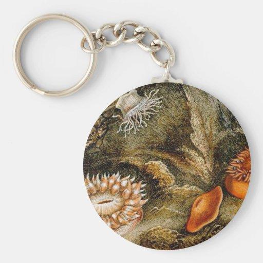 Vintage Sea Life Keychain