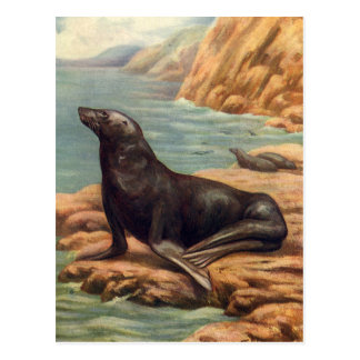 Vintage Sea Lion by the Seashore, Marine Mammals Postcard