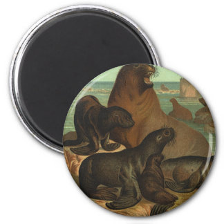 Vintage Sea Lions on the Beach, Marine Life Animal 2 Inch Round Magnet