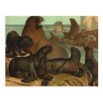 Vintage Sea Lions on the Beach, Marine Life Animal Postcard