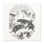 Vintage Sea Otters 1800s Otter Illustration Gallery Wrapped Canvas