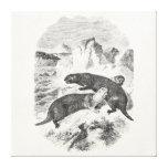 Vintage Sea Otters 1800s Otter Illustration Canvas Print