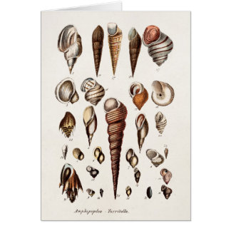 Vintage Sea Shells Personalized Retro Auger Shell Card