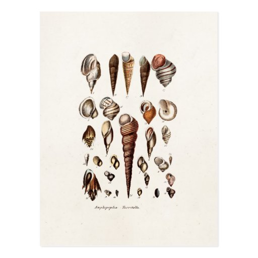 Vintage Sea Shells Personalized Retro Auger Shell Post Card