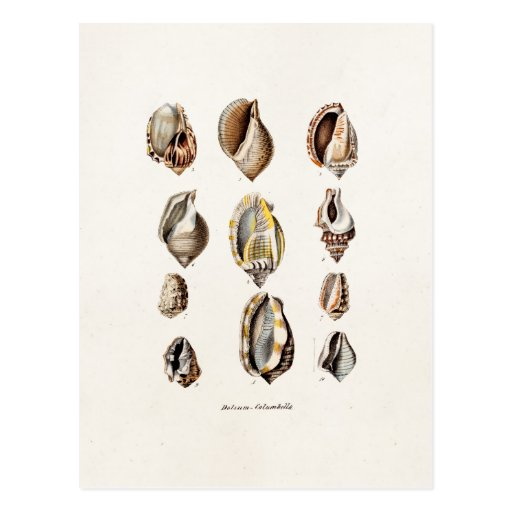 Vintage Sea Shells Personalized Retro Berge Shell Post Cards