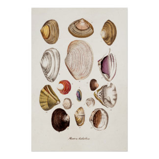Vintage Sea Shells Personalized Retro Clam Shell Poster
