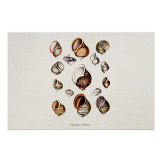 Vintage Sea Shells Personalized Retro Snail Shell Print
