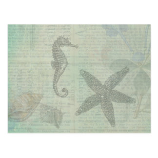 Vintage Sea Shells, Starfish, and Sea Horse Post Card