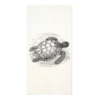 Vintage Sea Turtle Personalized Marine Turtles Card