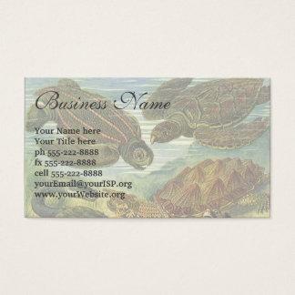 Vintage Sea Turtles and Tortoises by Ernst Haeckel Business Card