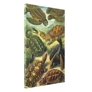 Vintage Sea Turtles and Tortoises by Ernst Haeckel Stretched Canvas Prints