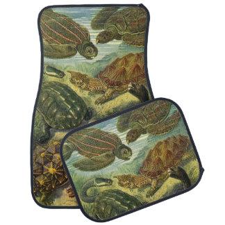 Vintage Sea Turtles and Tortoises by Ernst Haeckel Car Mat