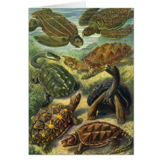Vintage Sea Turtles and Tortoises by Ernst Haeckel Card