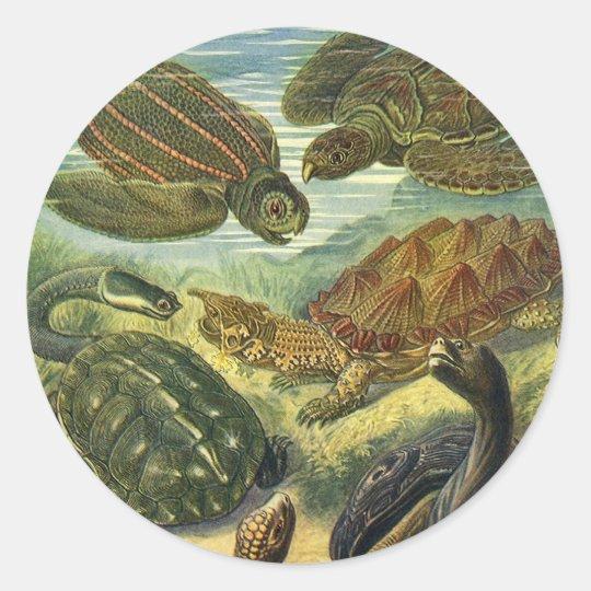 Vintage Sea Turtles Land Tortoise by Ernst Haeckel Classic Round Sticker