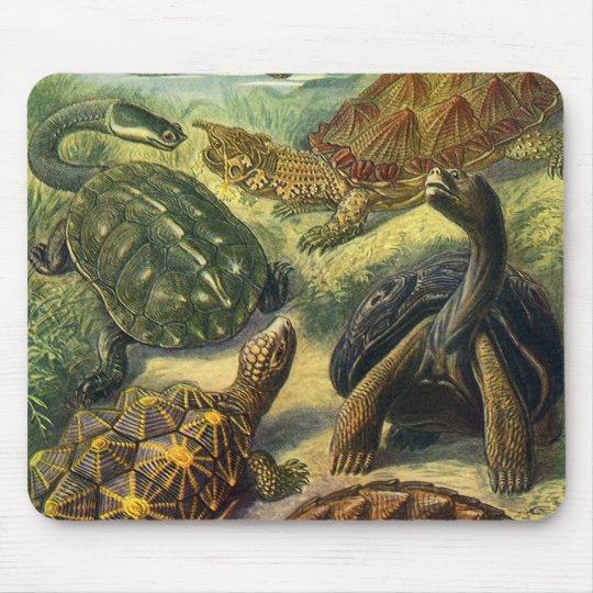 Vintage Sea Turtles Land Tortoise by Ernst Haeckel Mouse Pad