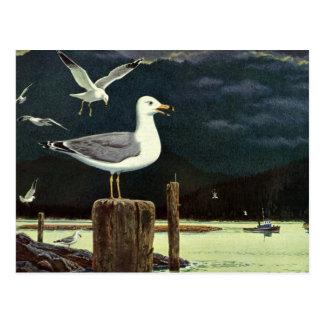 Vintage Seagull Perched Pier, Marine Birds Animals Postcard