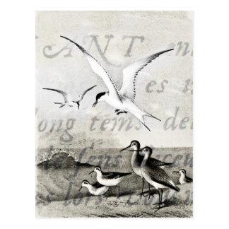 Vintage Seagulls Customized Retro Seagull Template Postcard