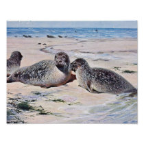 Vintage Seals on the Beach Art Poster
