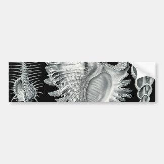 Vintage Seashell Print Bumper Sticker