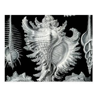 Vintage Seashell Print Postcard