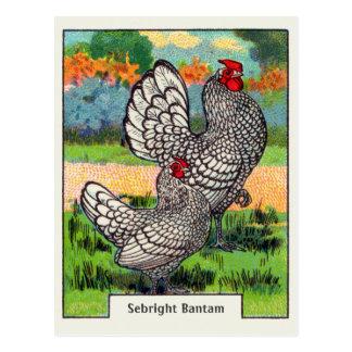 Vintage Sebright Bantam Chicken Postcard