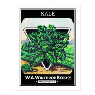 Vintage Seed Package Kale Vegetables Postcard