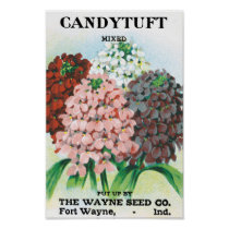 Vintage Seed Packet Art, Candytuft Garden Flowers