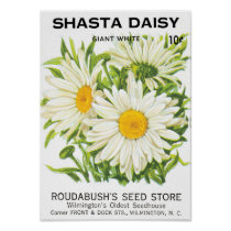 Vintage Seed Packet Art, Shasta Daisy Flowers
