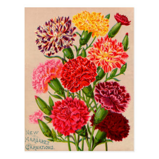 Vintage Seed Packet Cards, Postage and Gifts Postcard