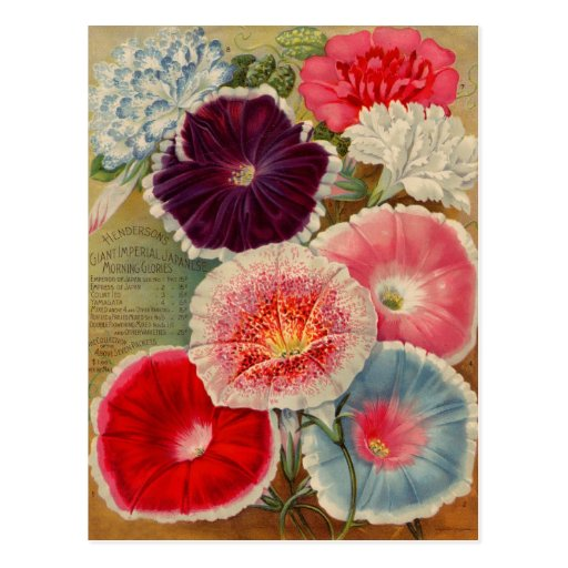Vintage Seed Packet Cards, Postage and Gifts Post Card