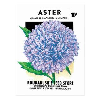 Vintage Seed Packet Label Art, Aster Flowers Postcard
