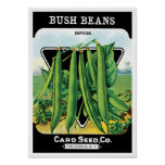 Vintage Seed Packet Label Art, Bush Bean Veggies Poster