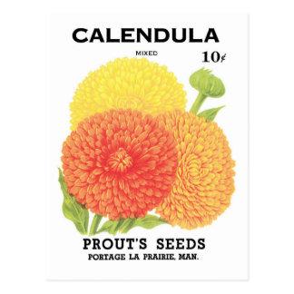Vintage Seed Packet Label Art, Calendula Flowers Postcard