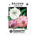 Vintage Seed Packet Label Art, Camellia Flowers Postcard