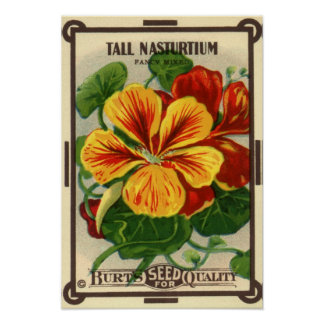 Vintage Seed Packet Label Art, Nasturtiums Poster