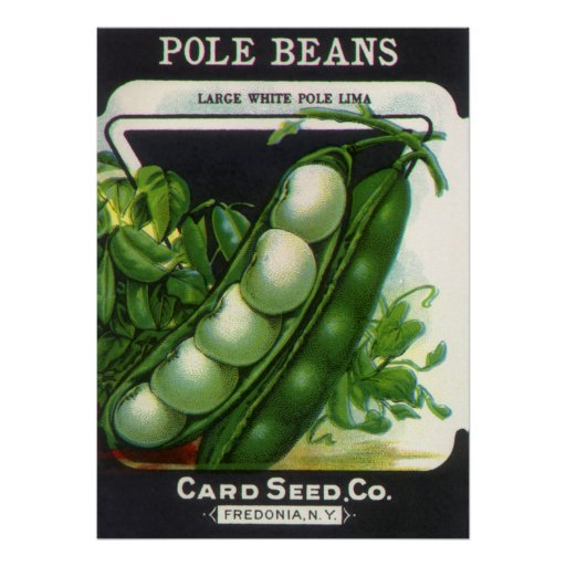 Vintage Seed Packet Label Art, Pole Lima Beans Poster