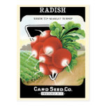 Vintage Seed Packet Label Art, Scarlet Radishes Postcard