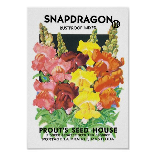 Vintage Seed Packet Label Art, Snapdragon Flowers