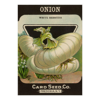 Vintage Seed Packet Label Art White Bermuda Onions Poster